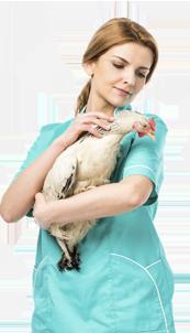 Вызов ветеринара на дом круглосуточно